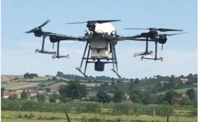 ÇELTİK TARLALARINDA DRONE İLE İLAÇLAMA DÖNEMİ BAŞLADI